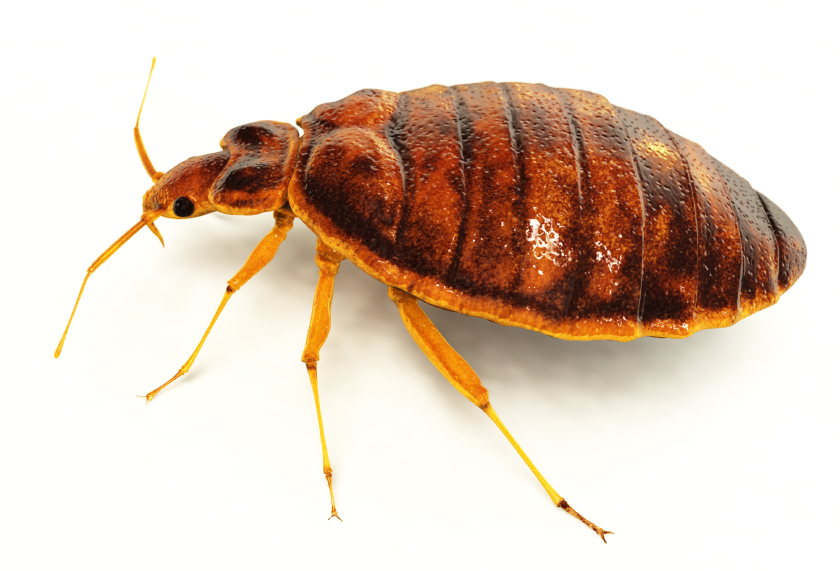 Bed Bug control London